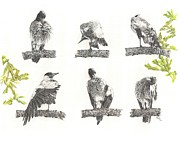 Magpies Drawings Metal Prints - Grooming is so Important Metal Print by Leonie Bell
