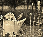 VLee Watson - Grosbeak on Vintage...