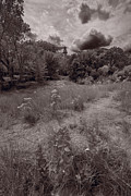 Il Prints - Gross Point Beach Grasses BW Print by Steve Gadomski