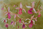 Ground Paintings - Ground Orchids by Carol Marcus
