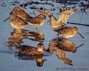 Marie  Cardona - Group of Dowitchers