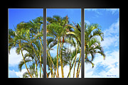 Frond Prints - Group Palms Triptych -Black Background Print by Cheryl Young