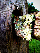 Lichen Pictures Prints - Growing Country Fence Print by Deborah Fay