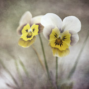 Yellow Flowers Prints - Growing Wild Print by Priska Wettstein