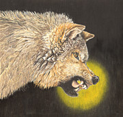 Growling Drawings Framed Prints - Growling Wolf Framed Print by Vicki Knoll