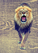 Ferocious Prints - Growling Wood Grain Print by Bill Tiepelman