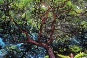 Tropical Painting Metal Prints - Growth Metal Print by Terry Reynoldson