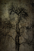Horizon Metal Prints - Grunge Art Part II - Grungy Tree Metal Print by Erik Brede