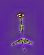 Grunge Flower - Zinnia Print by Larry Bishop