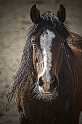 Forelock Photos - Grungy Boy D0380 by Wes and Dotty Weber