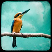 Guam Prints - Guam Kingfisher - Exotic birds Print by Gary Heller