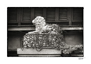 Bryant Metal Prints - Guardian in Black and White Metal Print by Brenda Bryant