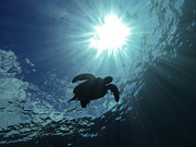 Sea Turtle Photos - Guardian of the Sea by Brad Scott