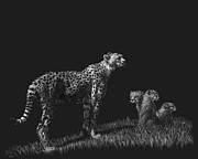Cheetah Drawings Framed Prints - Guarding the Future Framed Print by Heather Ward