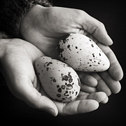 For Ninety One Days - Guillemot Eggs Black And...
