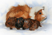 Pig Framed Prints - Guinea Pig Family Framed Print by Jutta Maria Pusl