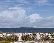 Judy Hall-Folde - Gulf Coast Beauty