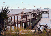 Parris Island Framed Prints - Gulf Coast Pier with a Gathering of Birds Framed Print by Carla Parris