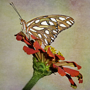 Gulf Fritillary Photos - Gulf Fritillary Butterfly by David and Carol Kelly
