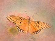 Gulf Fritillary Photos - Gulf Fritillary by David and Carol Kelly