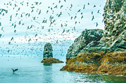 Sea Birds Posters - Gull Island Poster by Debra  Miller