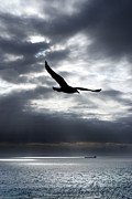 Gull Metal Prints - Gull Metal Print by Mark Rogan
