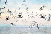 Textured Bird Mixed Media Posters - Gulls Flying Over the Ocean Poster by Peggy Collins