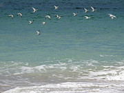 Gulls Flying Over The Ocean Print by Zulfiya Stromberg