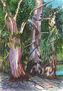 Gum Trees In Oz Print by Carol Wisniewski