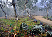Terry Everson - Gum Trees In The Fog