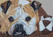 Anita Putman - Gus - English Bulldog...