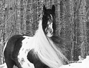 Gypsy Vanner Digital Art - Gypsy Mare and Winter Wonderland by Feathered Gold Stables
