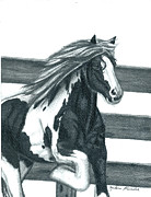 Gypsy Drawings Prints - Gypsy Mare Print by Melena Paradee