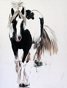 Forelock Art - Gypsy Vanner by Isabella F Abbie Shores
