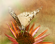 Nectar Posters - Hackberry Emperor Butterfly 1 Poster by Betty LaRue