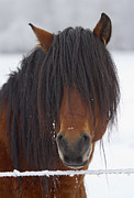Winter Photo Originals - Haircut Needed by Mike  Dawson