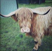 Les Cunliffe - Hairy cow