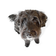 Dog Prints Digital Art Posters - Hairy Dog Photographic Caricature Poster by Natalie Kinnear