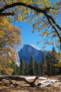 Half Dome In Yosemite Print by Alex Cassels