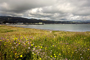 Overcast Art - Half Moon Bay in Spring by Matt Tilghman