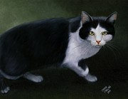 Sharon Challand - Half Wild Tom Cat