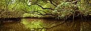 Halfway Creek At Low Tide - Everlglades Print by Matt Tilghman