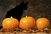 Cat Greeting Card Prints - Halloween Pumpkins and The Witches Cat Print by Christopher and Amanda Elwell