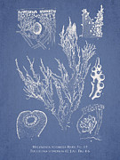 Halymenia Formosa And Eucheuma Spinosum Print by Aged Pixel