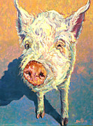 Pig Framed Prints - Hamlet Framed Print by Patricia A Griffin