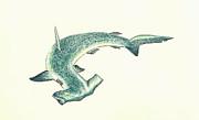 Hammerhead Shark Print by Michael Vigliotti