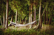 Grass Digital Art Metal Prints - Hammock Heaven Metal Print by Scott Norris