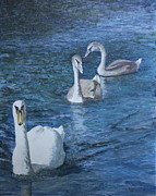 Swans... Paintings - Hampton Swans by William Young