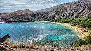 Turquoise Water Framed Prints - Hanauma Bay Framed Print by Cheryl Young