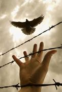 Barbed Wire Fences Posters - Hand Reaching Out For Bird Poster by Nathan Lau